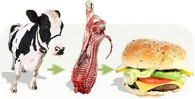 Cowsintoburgers